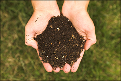 Composted Soil